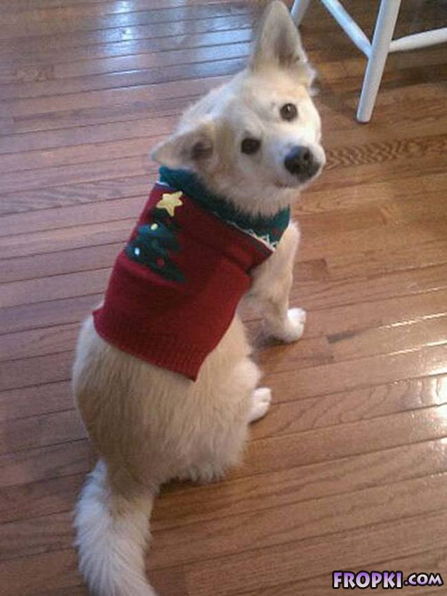 Dogs Sad in Their Ugly Christmas Sweaters