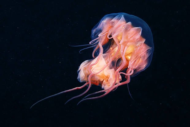 Stunning Photos Of Jellyfish - Magical World