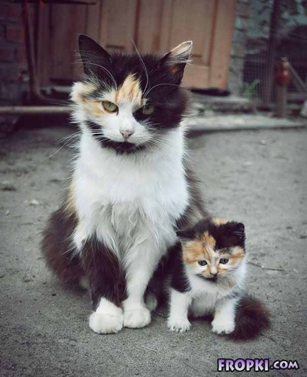 Animals With Their Adorable Mini-Me Counterparts
