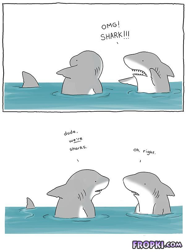 Cute Animal Comic Series