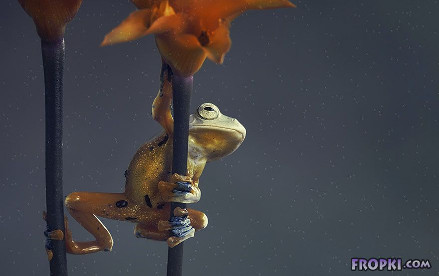 Creepy or Cute? - Magical Miniature World Of Frogs