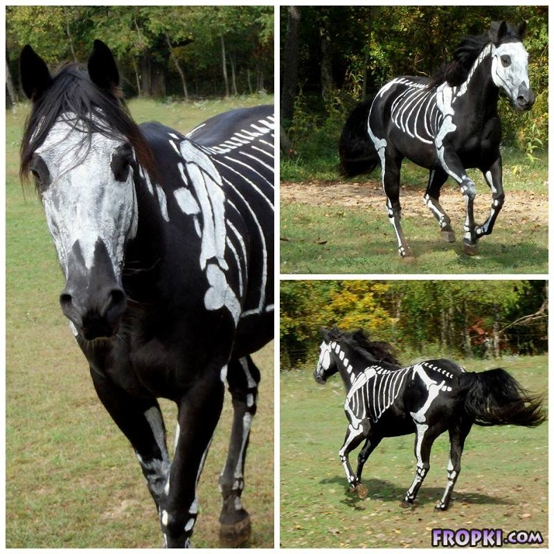 Skeleton Horse Becomes Famous