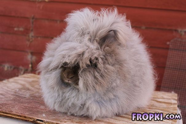 Fluffy Animals Will Make You Say Awww