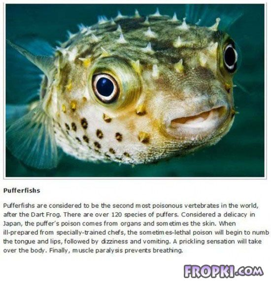 10 Animals you don't Ever Want to Meet