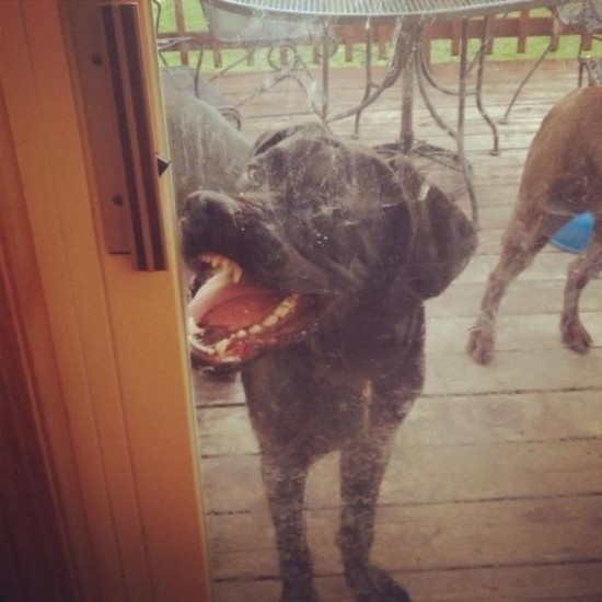 Hilarious Dogs That Forgot How to Dog