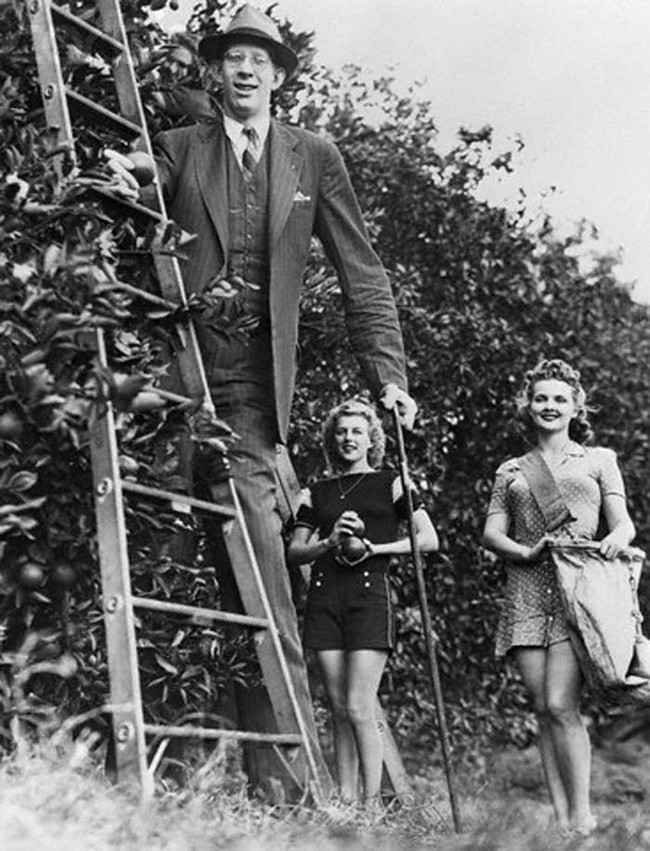 World's Tallest Man Ever - Robert Wadlow