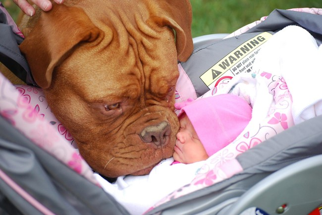 Adorable Dog and Baby BFFs
