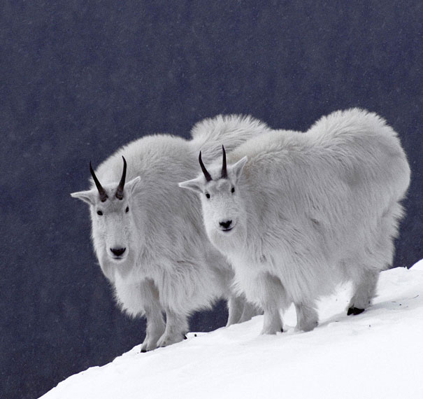 Animal Twins That Are Tough To Tell Apart