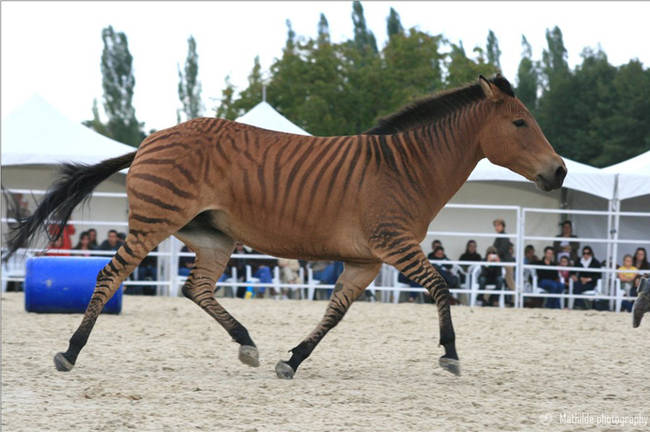 Totally Real Animal Hybrids From Around The World