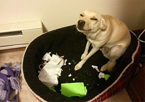 Dogs Can Be Idiots, Too