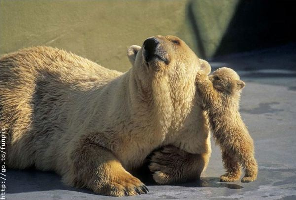 27 Baby Animals with their Loving Parents