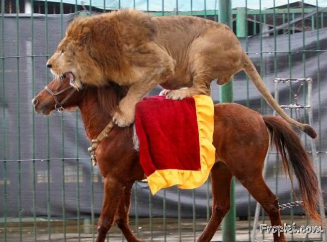 A Horse Riding Lion & Tiger