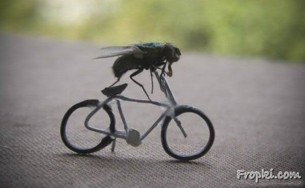 Life Adventures of a FLY
