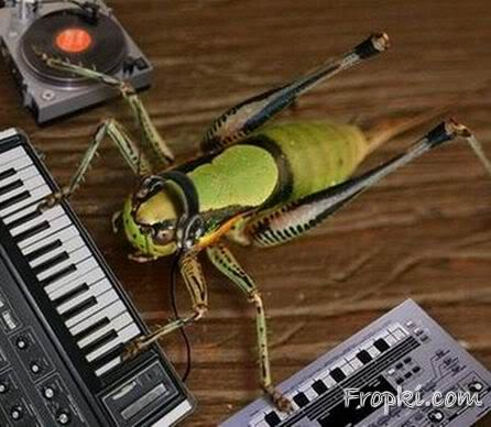 Animals with Musical Knowledge