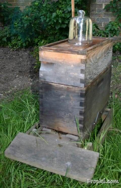Honey Bee Cultivation